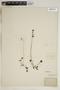 Drosera rotundifolia L., U.S.A., L. N. Johnson, F