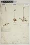 Drosera rotundifolia L., U.S.A., T. J. Hale, F