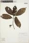 Bertiera guianensis Aubl., Bolivia, S. G. Beck 16438, F