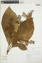 Cinchonopsis amazonica (Standl.) L. Andersson, Peru, R. B. Foster 10175, F