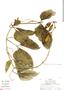 Psiguria triphylla (Miq.) C. Jeffrey, Peru, R. B. Foster 8270, F