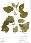 Salvia polystachya Ortega, Costa Rica, F. Givens 3370, F