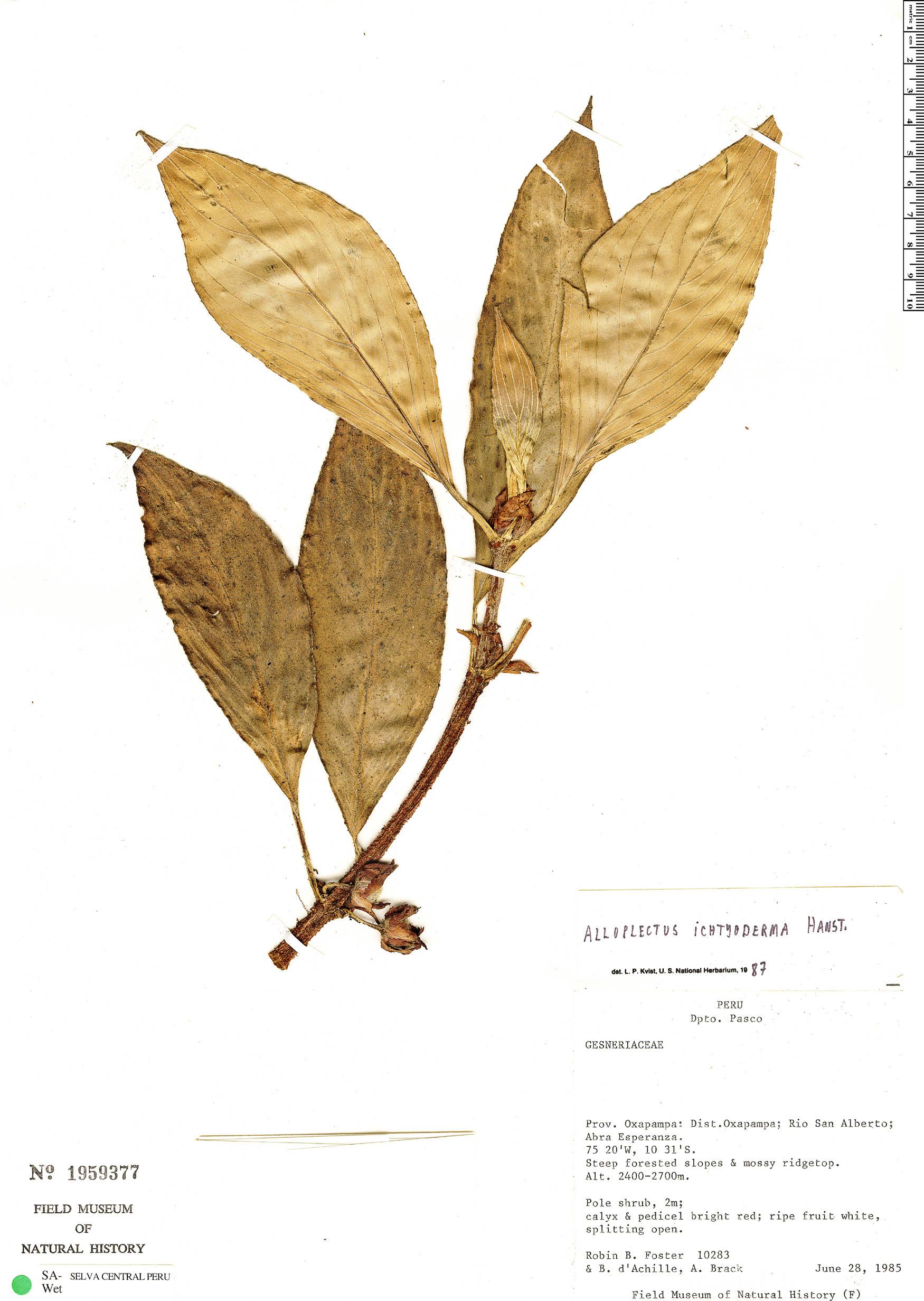 Specimen: Glossoloma ichthyoderma