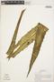 Agave americana L., PERU, T. B. Croat 18210, F