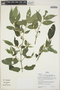 Faramea quinqueflora Poepp., Peru, H. Beltrán S. 701, F