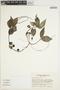 Peperomia abyssinica Miq., KENYA, R. B. Faden 77/903, F