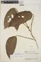 Monstera adansonii subsp. laniata (Schott) Mayo & I. M. Andrade, VENEZUELA, J. A. Steyermark 61388, F