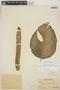 Monstera adansonii subsp. laniata (Schott) Mayo & I. M. Andrade, PERU, Ll. Williams 3044, F