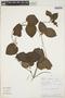Geophila cordifolia Miq., Peru, R. B. Foster 7821, F