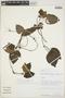 Geophila cordifolia Miq., Peru, D. N. Smith 3862, F
