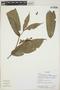 Ixora acuminatissima Müll. Arg., Ecuador, K. Romoleroux 2428, F
