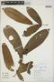 Ixora acuminatissima Müll. Arg., Peru, R. B. Foster 11906, F