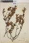Berberis L., URUGUAY, A. L. Cabrera 3721, F