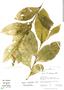 Cestrum strigilatum, Peru, C. Sobrevila 2043, F