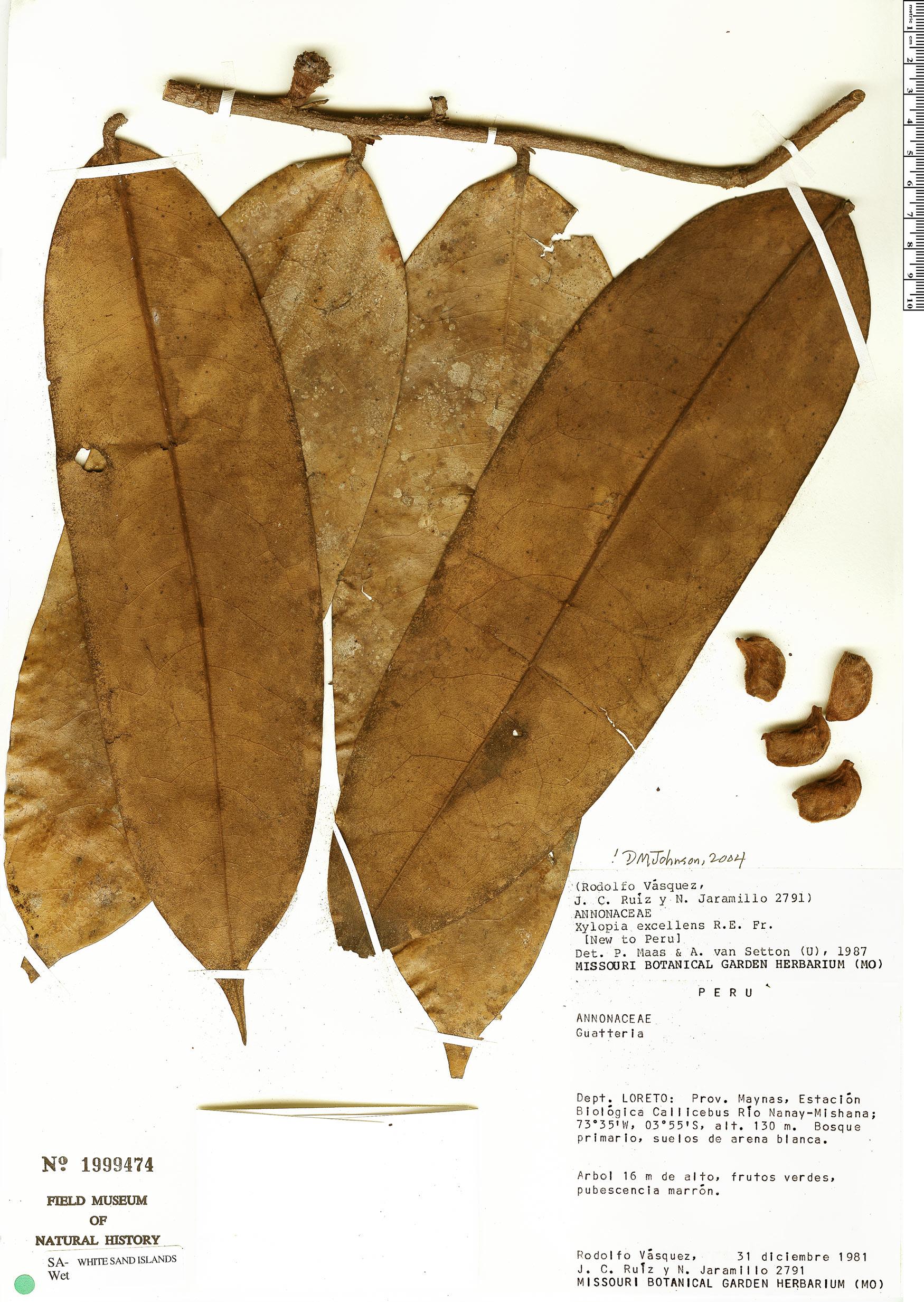 Espécimen: Xylopia excellens