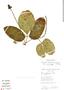 Psiguria ternata (Roem.) C. Jeffrey, Bolivia, S. G. Beck 16469, F