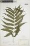 Goniopteris tetragona subsp. tetragona image