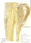 Gynerium sagittatum image