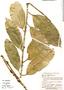 Garcinia madruno (Kunth) Hammel, Bolivia, E. Meneces 106, F