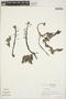 Utricularia L., ECUADOR, R. B. Foster 3601, F