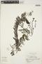Utricularia L., ARGENTINA, T. M. Pedersen 10719, F
