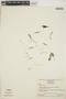 Utricularia L., VENEZUELA, J. A. Steyermark 391, F