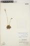 Pinguicula moranensis image