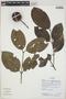 Posoqueria latifolia image