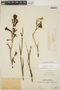 Agave polianthes Thiede & Eggli, PERU, Ll. Williams 5858, F
