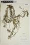 Utricularia macrorhiza image