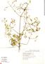 Pristimera celastroides (Kunth) A. C. Sm., Mexico, W. López-Forment 1350, F