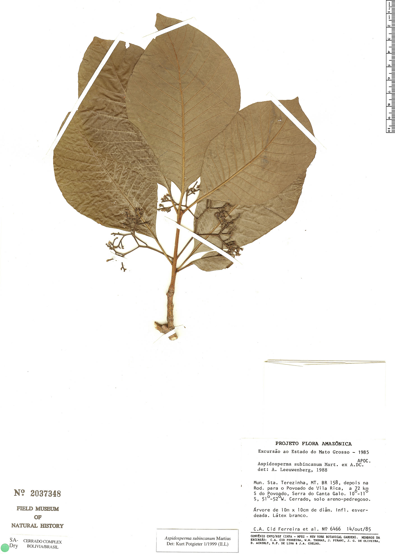 Specimen: Aspidosperma subincanum