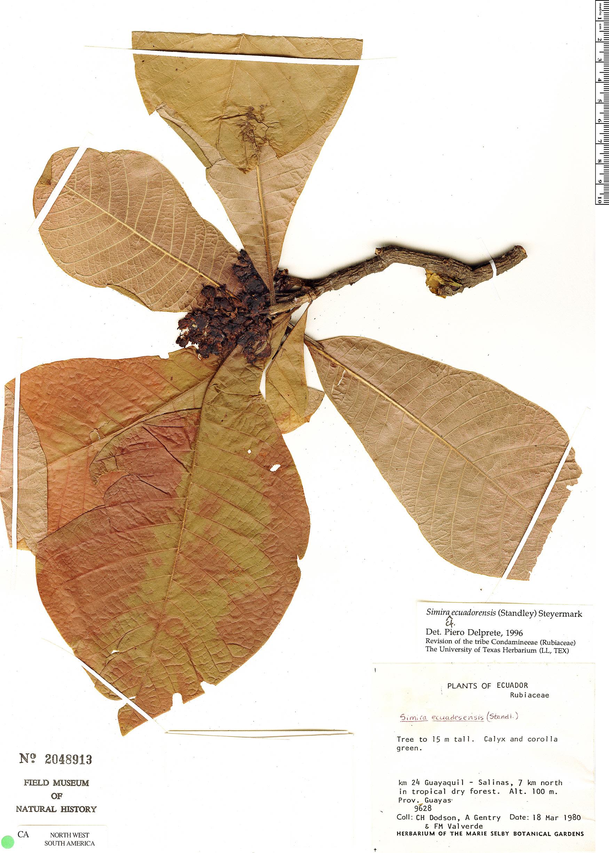 Specimen: Simira ecuadorensis