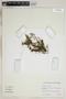 Utricularia L., U.S.A., K. E. Harshfield 239, F