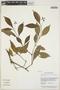Psychotria officinalis image