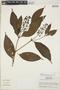 Palicourea subfusca (Müll. Arg.) C. M. Taylor, Peru, S. T. McDaniel 11353, F