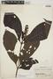 Palicourea subfusca (Müll. Arg.) C. M. Taylor, Peru, J. M. Schunke 260, F