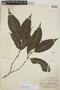 Palicourea subfusca (Müll. Arg.) C. M. Taylor, Peru, E. P. Killip 29657, F