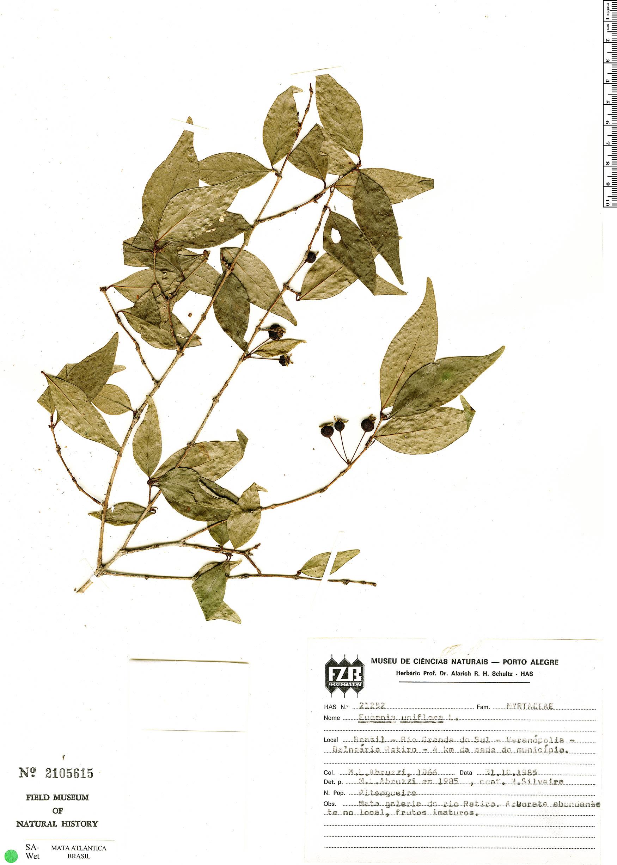 Specimen: Eugenia uniflora