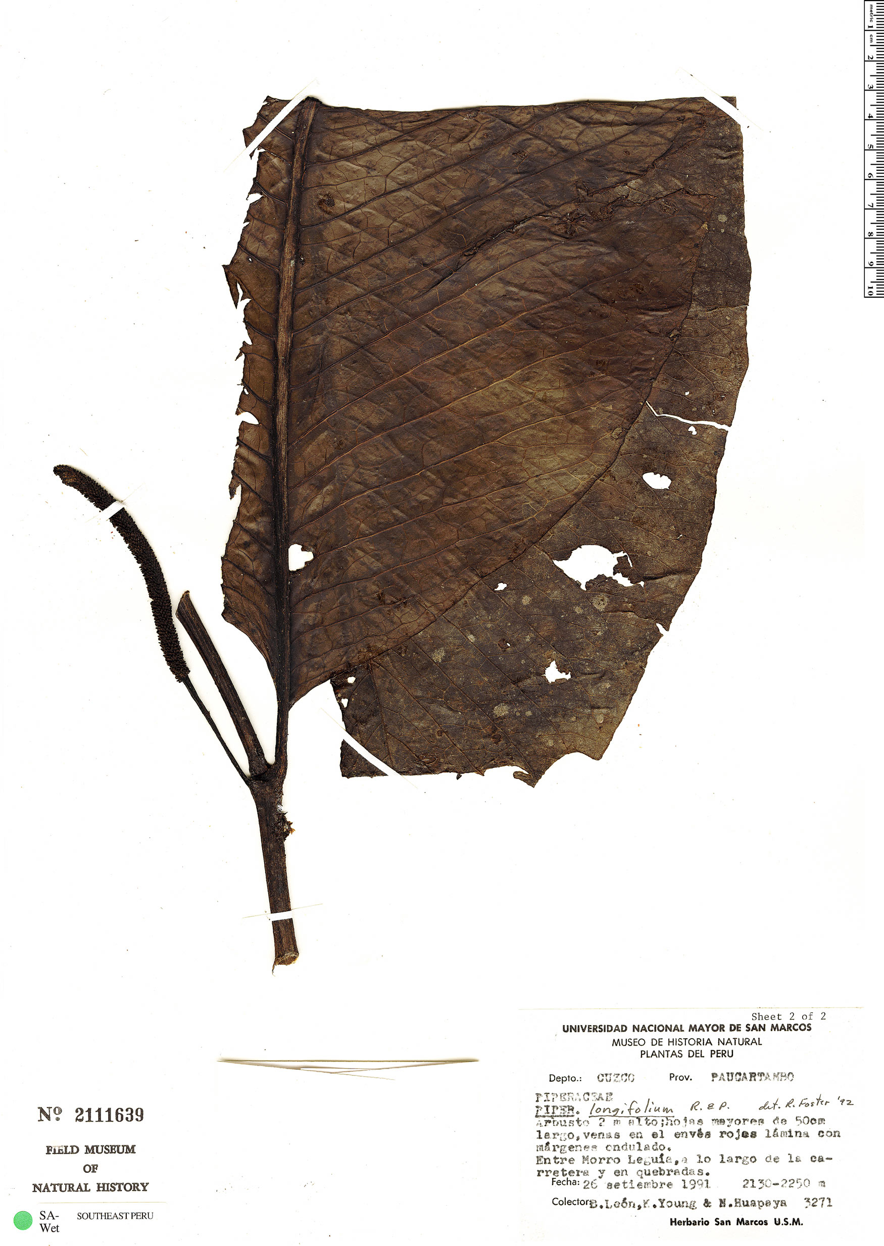 Search Results : Piper | Rapid Reference | The Field Museum