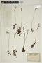 Drosera rotundifolia L., FRANCE, H. E. Jeanpert