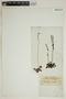 Drosera rotundifolia L., 83