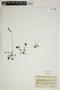 Drosera rotundifolia L., FRANCE, J. S. Blanchet 66