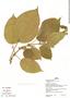 Clidemia allardii Wurdack, Peru, H. Beltrán 559, F