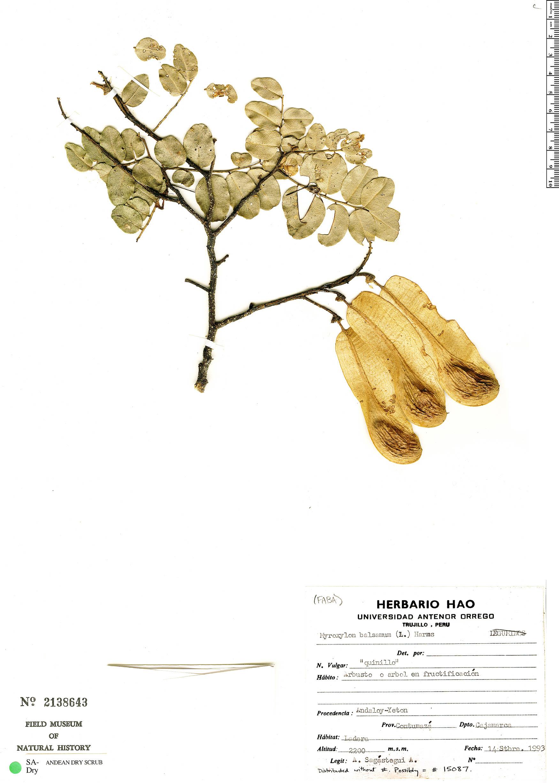 Espécime: Myroxylon balsamum