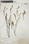 Euphorbia mesembryanthemifolia Jacq., BAHAMAS, N. L. Britton 2256, F