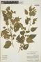 Acalypha comonduana image