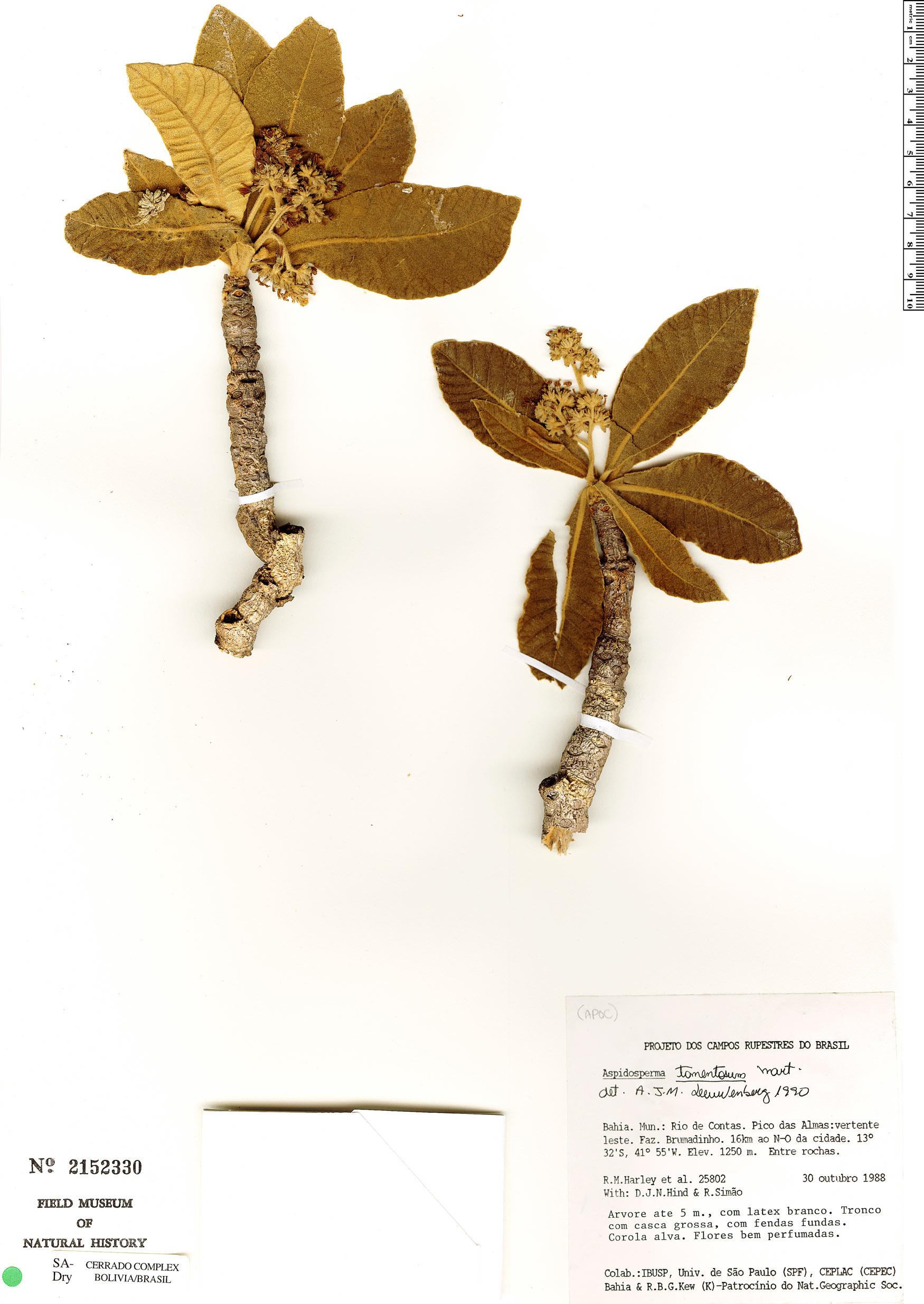 Specimen: Aspidosperma tomentosum