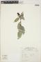 Cavendishia bracteata (Ruíz & Pav. ex J. St.-Hil.) Hoerold, PERU, L. van der Hoogte 3494, F