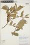 Cavendishia bracteata (Ruíz & Pav. ex J. St.-Hil.) Hoerold, PERU, R. Foster 7470, F